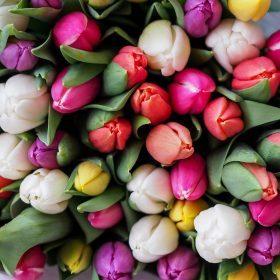 Estampas Florais D&G
